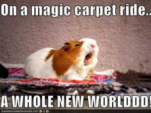 whole-new-world-song-funny-animals.jpg