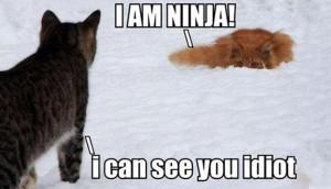 Funny ~ Cats ~ Ninja ~ Quote