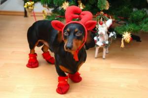 funny christmas animals app christmas themes up already funny ...