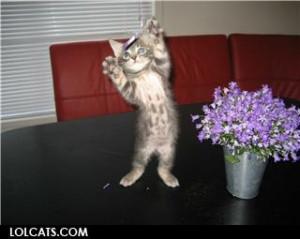 Cute Kitten Jazz Hands Funny...