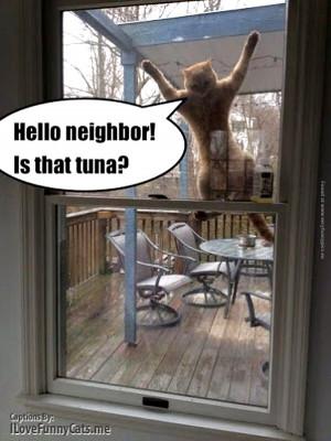 Tags: Cat , Neighbor , Neighbors , Tuna