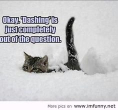 hate this snow! | Funny Pictures, Funny Quotes – Photos, Quotes ...