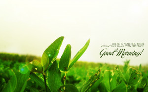 Good morning green tea with quote