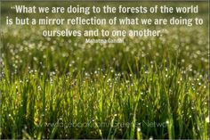 What we are doing to the forests of the world is but a mirror ...