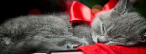 Cute Little Kitten Facebook