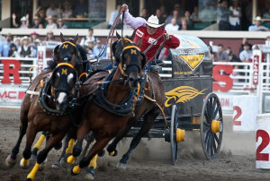 Chuck Wagon races, Calgary Stampede, fun couple of days.