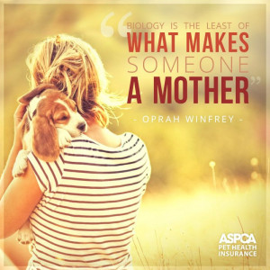 wishing all you pet moms a furbulous mother s day