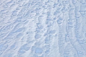footprints-in-snow_medium.jpg