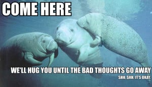 Nothing like supportive manatees :-)