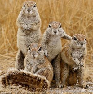All Wildlife Photographs