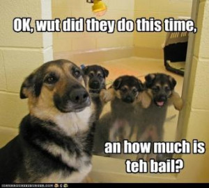 OTHER FUN AND FUNNY DOG HUMOR, maybe not GSD but worth the smile!