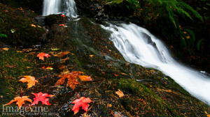 ... Pictures photos of fall colors and food inspirational quotes images of