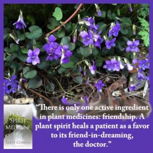 Quote from Plant Spirit Medicine