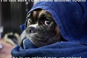 Funny boxer | funny-pics.co