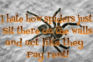 Haha! funny things that spiders do!