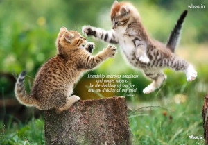 Images Quotes Cats Friendship Day Happy Funny Cat Hd Picture