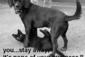 funny-pics.coFunny black cat and dog image
