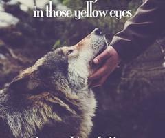 she wolf | Tumblr