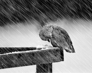 One way to survive a storm of life, a sad one, is let the hurt...hurt