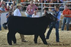 that moment the judge walks around the steer and names it champion ...