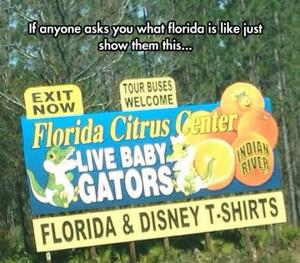 Florida In A Nutshell