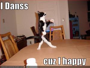 Funny Cat Dance