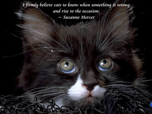 Cats and Quotes Scenic Reflections 3.0 : A cute kitten