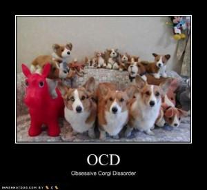corgi, funny - Bing Images
