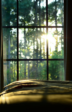 via Sun shining through the trees and window | Murray Mitchell )