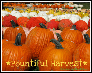 photo of: Pumpkins on Parade from RainbowsWithinReach