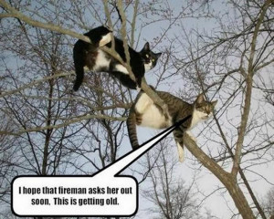 ... post subject some funny animal thoughts some funny animal thoughts