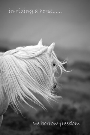 Inspirational quote quotation, horse photo,