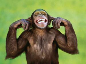 Free wallpapers monkeys