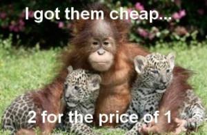 funny trader orangutan funny trader orangutan