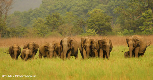 Your Trail Home Elephant Herd
