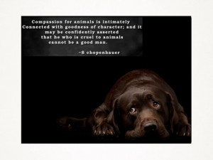 Compassion for animals quote