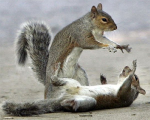 Fighting Squirrels Quotes and Sound Clips