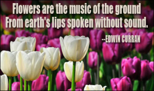 ... Of The Ground From Earth's Lips Spoken Without Sound - Flower Quote
