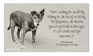 Quotes About Animal Shelters