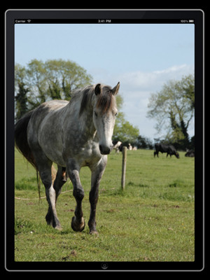 More apps related Horse sayings