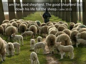 Am The Good Shepherd (John 10:11-23) refracted Glory: Jesus revealed ...