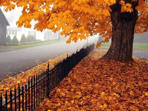 beautiful autumn season wallpapers beautiful autumn season wallpapers ...