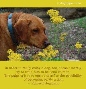... to the possibility of becoming partly a dog. -- Edward Hoagland