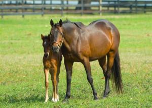 Breeding Horses And the breeding horse