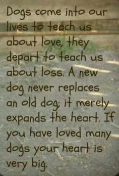 Dogs Quotes, Dogs Poems, Old Dogs, Life Lessons, So True, Big Heart ...