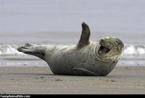 Laughing Out Loud - Return to Funny Animal Pictures Home Page