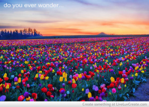 ... cute, do you ever wonder, inspirational, love, pretty, quote, quotes