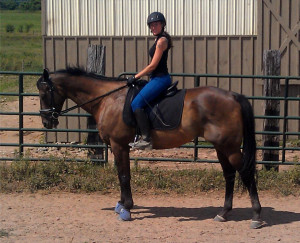 Discuss Dressage-trained Thoroughbred Gelding For Sale- NY at the ...