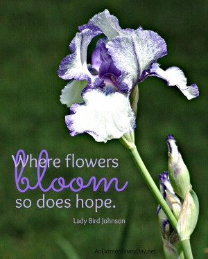 Where Flowers Bloom Does Hope