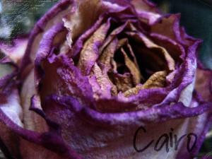 Purple Rose Of Cairo Quotes